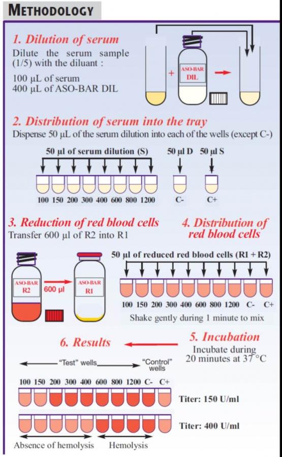 aso-bar kit - anti-streptolysin o antibodies test | elitechgroup, Skeleton