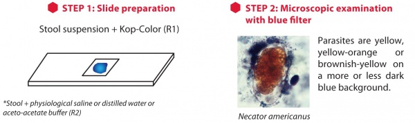 elistain_paratest_direct_method[1]